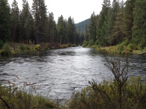 metolius river,camping in oregon,camp sherman,camping camp sherman,trout fishing oregon,allen springs campground