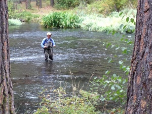 metolius river,camp sherman,fly fishing,metolius river fishing,camping in oregon