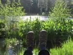 metolius river,camp sherman
