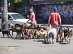 Buenos Aires argentina,dog walkers