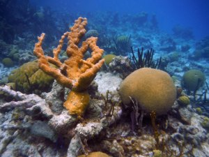 brain coral at the blue hole in belize