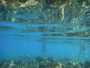 waldo lake water,waldo lake,oregon