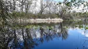 rowena crest,mosier,oregon,hiking,red winged blackbirds,pond
