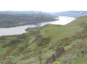 rowena crest,tom mccall preserve,hiking,oregon,wildflowers,columbia gorge