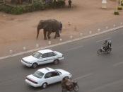 67-phnom-penh-elephant