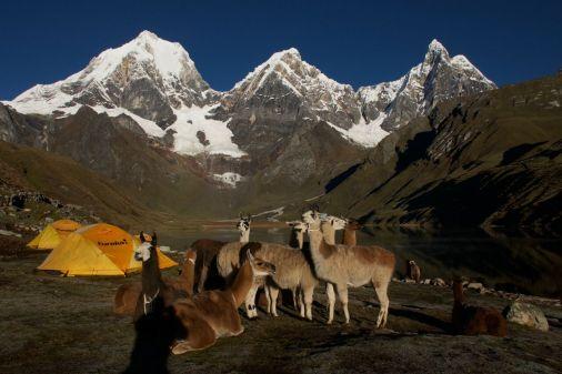 Lamas and Lake sunrise